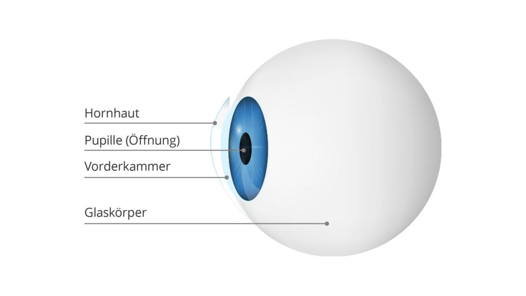 Abbildung Augapfel im Querschnitt mit Erklärungen zur Hornhaut, Pupille und Glaskörper